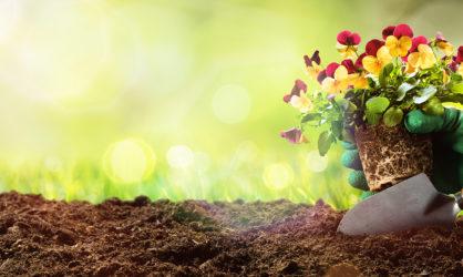 Soil / Compost